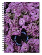 Pink Kalanchoe And Black Butterfly Spiral Notebook