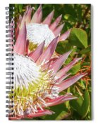 Pink King Protea Flowers Spiral Notebook