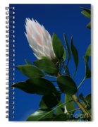 Pink King Protea Kula Maui Hawaii Spiral Notebook