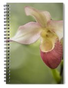 Pink Lady Slipper Spiral Notebook