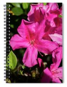 Pink Lilies Blooming Spiral Notebook