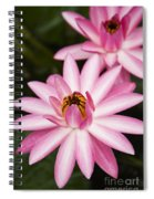 Pink Lotus Blossoms Spiral Notebook