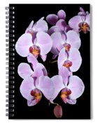Pink Orchid Iv Spiral Notebook
