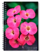 Pink Orchid Crown Of Thorns Spiral Notebook