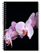 Pink Orchid Viii Spiral Notebook