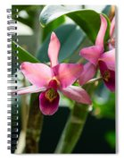 Pink Orchids - Exotic Tropical Glow Spiral Notebook