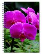 Pink Orchids Spiral Notebook