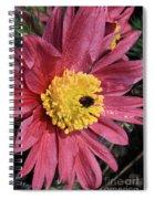 Pink Pasque Flower Spiral Notebook
