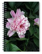 Pink Peone Spiral Notebook