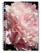 Pink Peony 2 Spiral Notebook