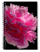 Pink Peony On A Black Background Spiral Notebook