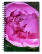 Pink Peoony In Bloom Spiral Notebook