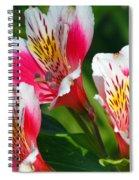 Pink Peruvian Lily 2 Spiral Notebook