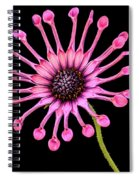 Pink Pinwheel Spiral Notebook
