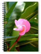 Pink Plumeria In Bloom Spiral Notebook