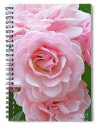 Pink Rose Cluster IIi Spiral Notebook