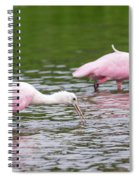 Pink Roseate Spoonbills Feeding Spiral Notebook