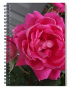 Pink Roses 2 Spiral Notebook