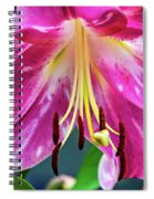 Pink Rules 2 - Paint Spiral Notebook