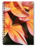 Pink Tropical Plumeria Makawao Maui Hawaii Spiral Notebook