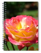 Pink Yellow Roses 3 Summer Rose Garden Giclee Art Prints Baslee Troutman Spiral Notebook