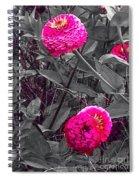 Pink Zinnias Against Grey Background Spiral Notebook