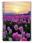 Pinks At Sunset Spiral Notebook