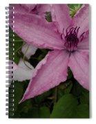Pinky Tuscadero Spiral Notebook