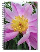 Pinwheel - Bowl Of Beauty Spiral Notebook