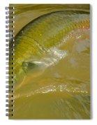 Pirarucu Or Arapaima Spiral Notebook