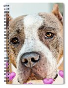 Pit Bull Dog - Pure Love Spiral Notebook