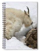 Planning Next Step Spiral Notebook
