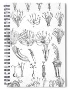 Plant Sexual Systems, Carl Linnaeus Spiral Notebook