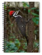 Plastic Wrapped Pileated Woodpecker Spiral Notebook