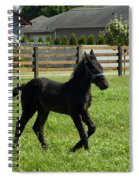 Playful Baby Spiral Notebook