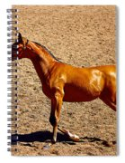 Playful Canter Spiral Notebook