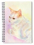 Playful Cat IIi Spiral Notebook