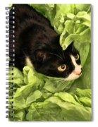 Playful Tuxedo Kitty In Green Tissue Paper Spiral Notebook