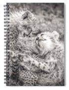 Playtime In Africa- Cheetah Cubs Acinonyx Jubatus Spiral Notebook