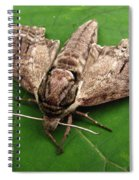 Plebeian Sphinx Moth Spiral Notebook