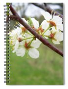 Plum Blossoms In Spring Spiral Notebook