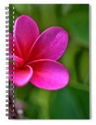 Plumeria - Royal Hawaiian Spiral Notebook