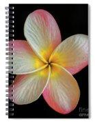 Plumeria Flower On Black Spiral Notebook