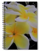 Plumeria In Yellow 4 Spiral Notebook