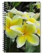 Plumeria In Yellow  5 Spiral Notebook