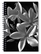 Plumeria Proper Evening Spiral Notebook