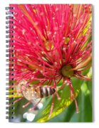 Pohutukawa Flower  Spiral Notebook