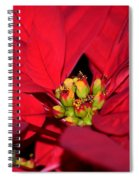 Cyathia Spiral Notebook