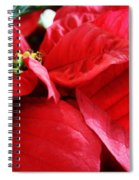Poinsettia In Bloom Spiral Notebook