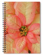 Poinsettia Passion Spiral Notebook
